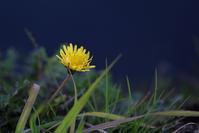 足元の春     ≪   散歩道の草花たち   ≫ - そよ風のつぶやき