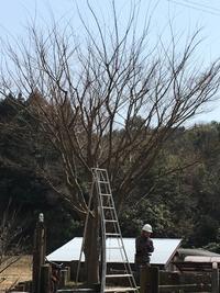 伐採… - hana ~hand made~