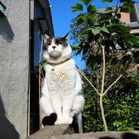 ネコ道でぷっかー - にゃルニア日記