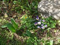 庭の様子 - 庭日和