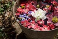 3月の庭の花 - 世話要らずの庭