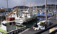 葉山漁港にて - 黒ニャンコのひとり言