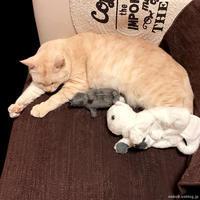 ゾゾベッド - 賃貸ネコ暮らし|賃貸住宅でネコを室内飼いする工夫