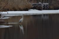 今週のウトナイ湖 - やぁやぁ。
