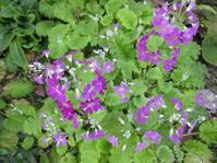 裏庭へ - 花の自由旋律