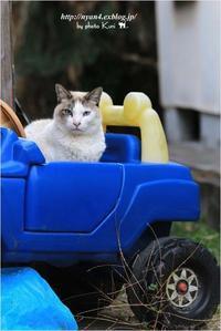 今日の外猫さん(元気だったんだね) - 4にゃん日記+