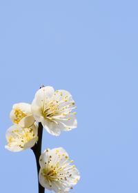 マクロレンズ花が好き - シャドーボックス作品集