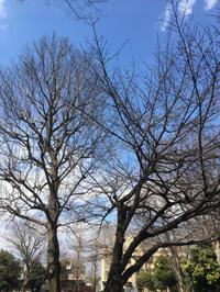 春日和 - 猫多摩散歩日記 2