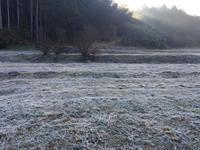 彼岸の入りは霜の朝。 - azukki的.