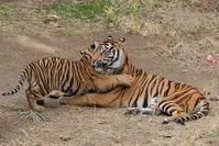 やっぱり母さんが好き - 動物園に嵌り中