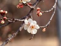 梅の花!! - 自然の中でⅡ