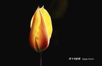 チュウリップ - 花々の記憶