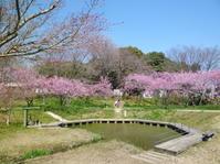 桃祭り ♪♪ - NONKOの絵手紙便り