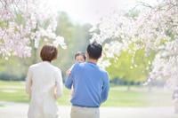 春!! 〜 桜満開フォト & 新緑爽やかフォト 〜  - ママグラファーJUNKOの                                       おんぶ街道まっしぐら