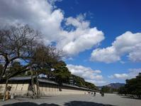 梅見頃です(^O^) 京都御苑 梅林 - Field to support your life ノハラ通信