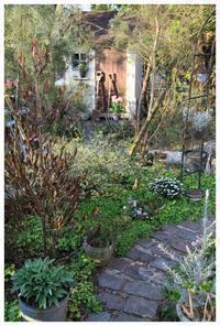 冬でも緑のあるガーデン - natu     * 素敵なナチュラルガーデンから~*     福岡県で庭の施工、外構造りをしてます