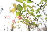 つつましい花だけど - ジージーライダーの自然彩彩
