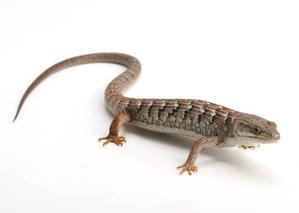 ウチらしいラインナップです! - ビーボックスアクアリウム 爬虫類・両生類情報