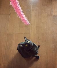 3代目猫じゃらし - 小 ハル 日和