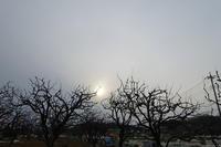 夕方ポタリング - TACOSの野鳥日記