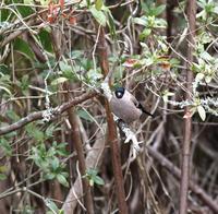 ウソもたくさん居てました(その3)・・・ - 一期一会の野鳥たち