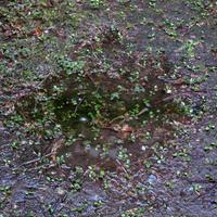 雨どいその後 - にゃルニア日記