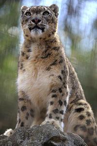 「ミルチャ」はゴロン、ゴロン - 動物園放浪記