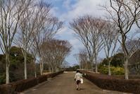 3/14 墓参り 桜が咲いていました (3/18記) - ゆるるばってん沈まんばい的生活 in 対馬