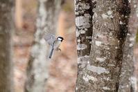 野鳥が集まる木 - 暮らしの中で