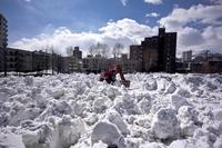 雪割り - 人間到る処青山有り
