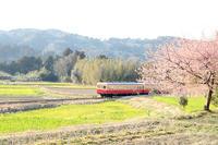 河津桜と小湊鉄道。 - *ぷるはあと*