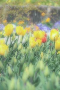 春待つ季節 2 - 気ままにお散歩