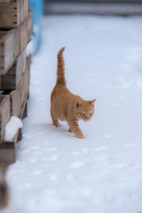 雪ねこ キイロちゃん - うみねこblues