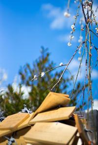 梅...青空...春 - Azzurro Nuvola