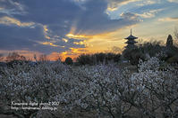 備中国分寺の夕景 - 気ままな Digital PhotoⅡ