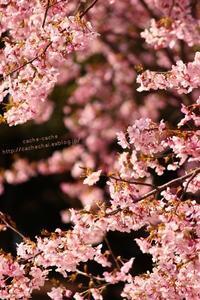 花の奥 - cache-cache