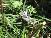 蝶 - ichibey日々の記録