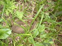 子うさぎ - 宮迫の! ようこそヤマボウシの森へ
