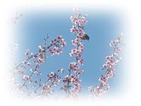 東叡山寛永寺ぶらりある記@上野~鶯谷 - 続☆今日が一番・・・♪