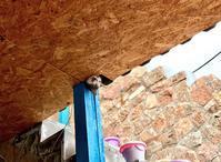 カッパドキアは猫の村 - カッパドキアのデイジーオヤ・キリムバッグ店長日記