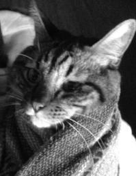 《トラちゃん占いは毎月1日》3月27日 地震体感と検証 - 猫丸ねずみの大荒れトーク