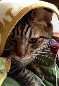 宇宙との交信・トラちゃんの4月占い&地震体感と検証 - 猫丸ねずみの大荒れトーク