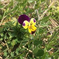 春の小さな花 - 楽園生活