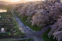 『春は今どのへんでしょうか』 - 嫁と息子と日常のなにげない風景と・・・。