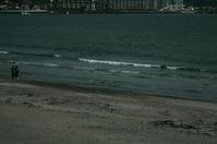 海が見たくなって・・・2   あれ、この水鳥は?ホオジロガモ? - 生きる。撮る。