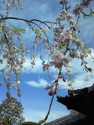 春分と下弦の月 - 気ままな星遊び