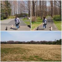 17年3月18日 水元公園で遊んだよ♪ - 旅行犬 さくら 桃子 あんず 日記