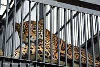 レディになった葉月ココちゃん@わんぱーくこうち - 今日ものんびり動物園