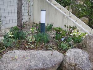 クリスマスローズが咲き揃いました - yoko-gardenの小部屋
