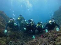 卒業旅行で、カメに逢いに(^^♪ - 八丈島ダイビングサービス カナロアへようこそ!